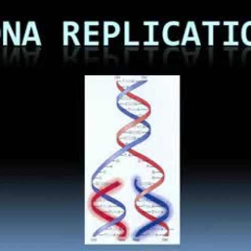 Dna Replication Chains
