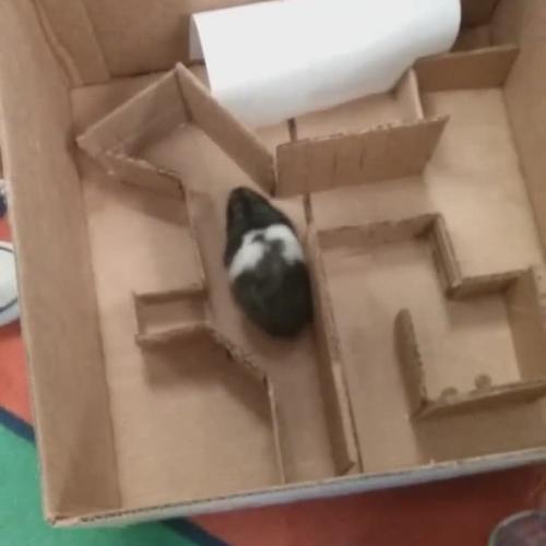 Leona's Hamster Maze