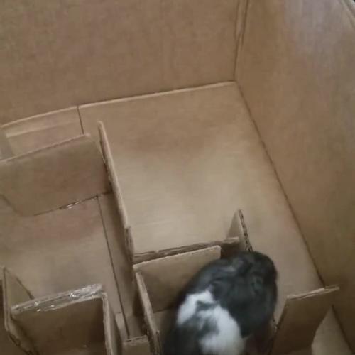 Kaitlyn's Hamster Maze
