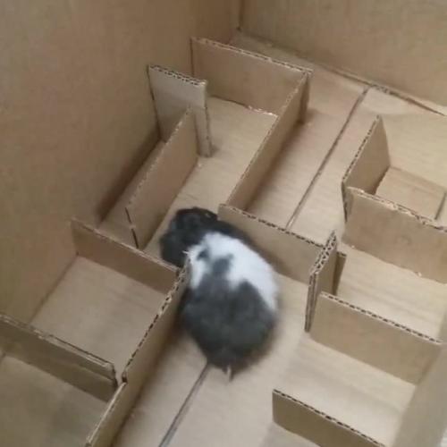 Katherine's Hamster Maze