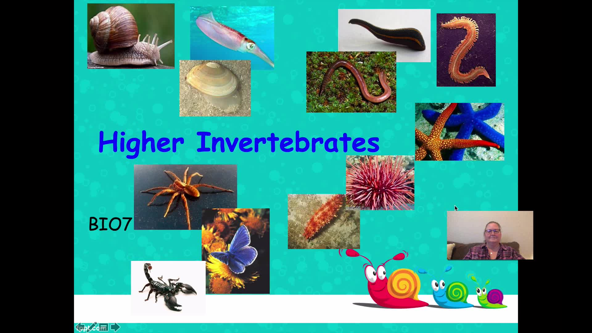 BIO7 - Higher Invertebrates - Part 1
