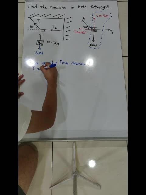 How to find the Forces in Equilibrium (Basic)