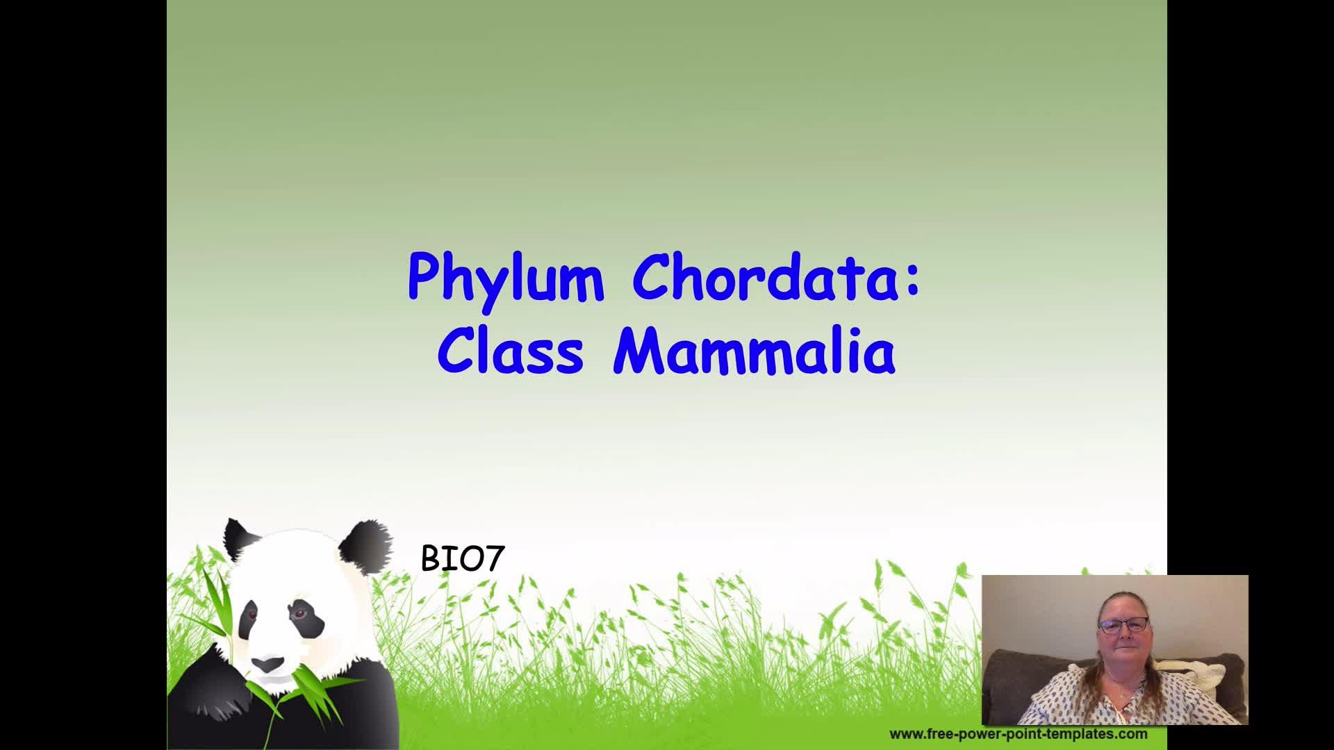 BIO7 - Mammalia