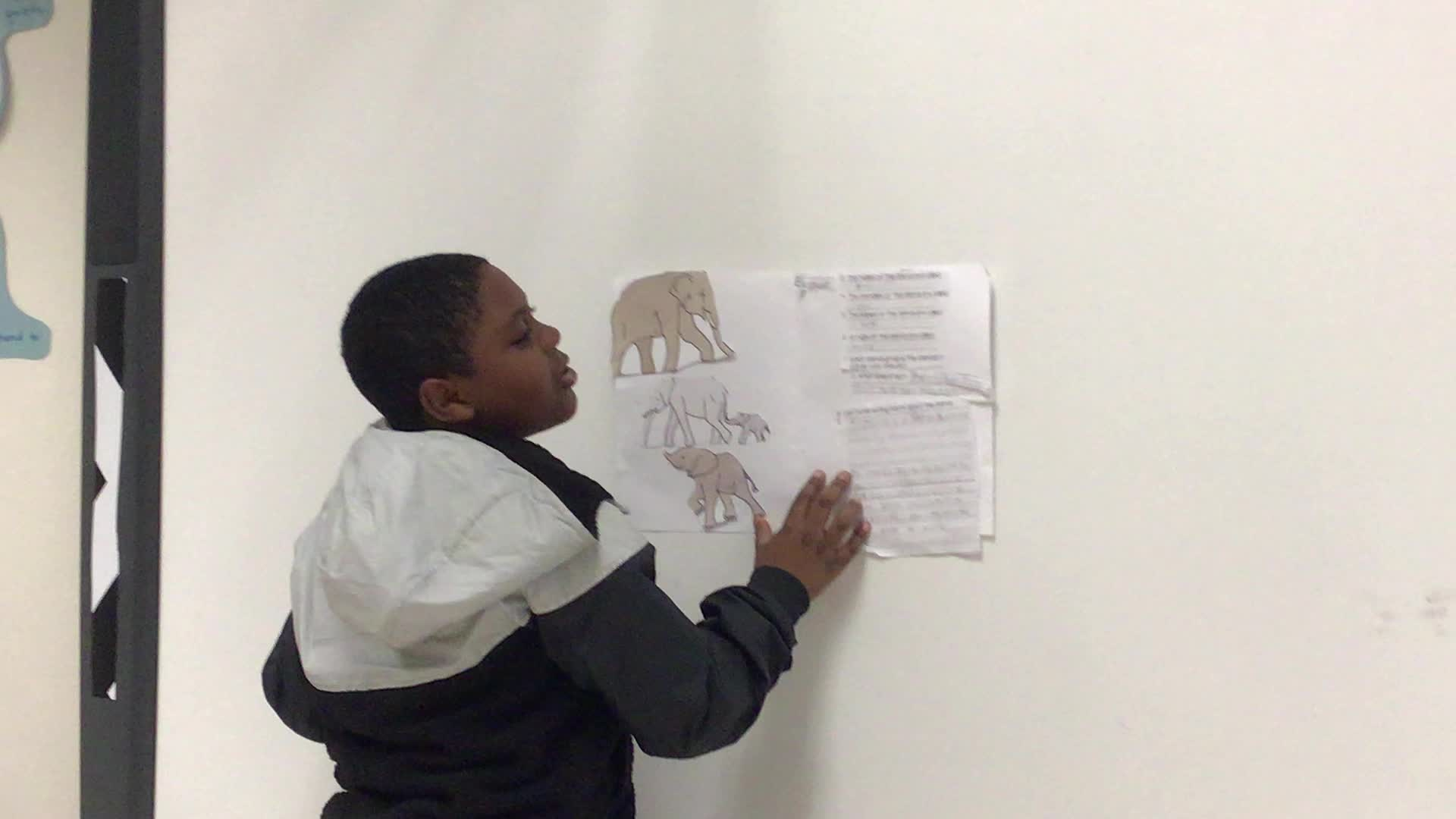 Elephant research presentation