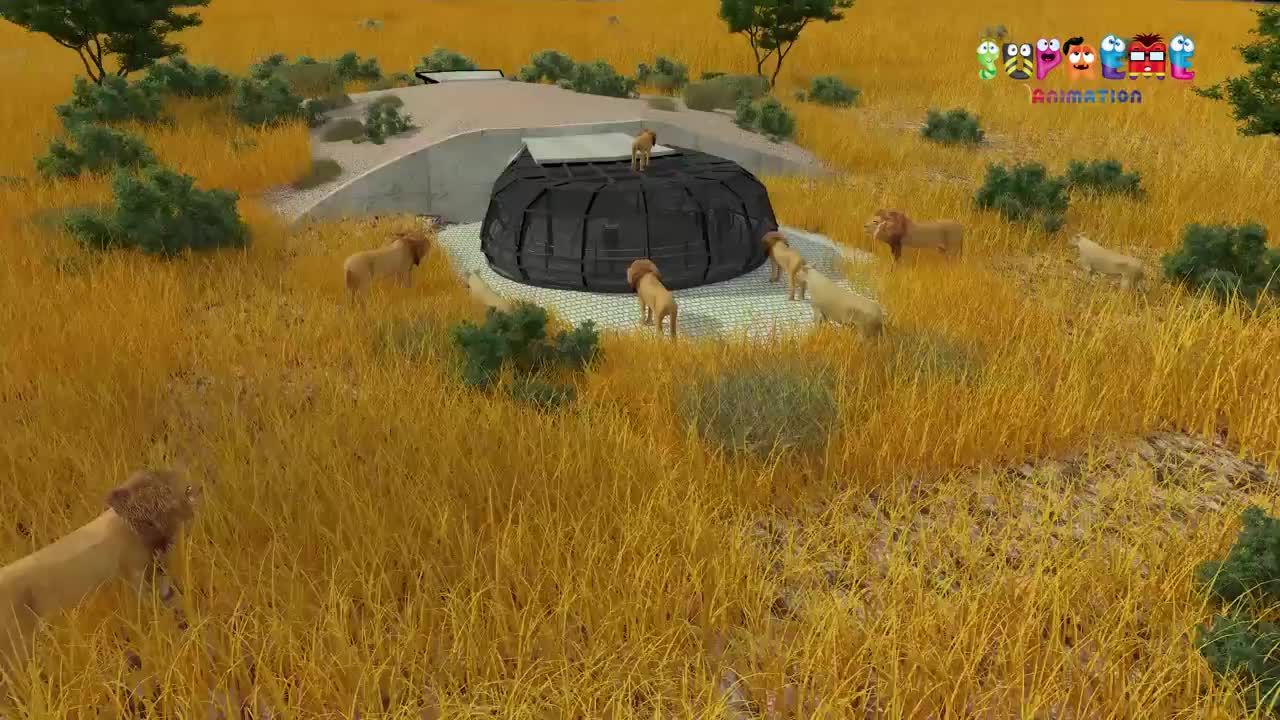 3D Zoo Lions Video