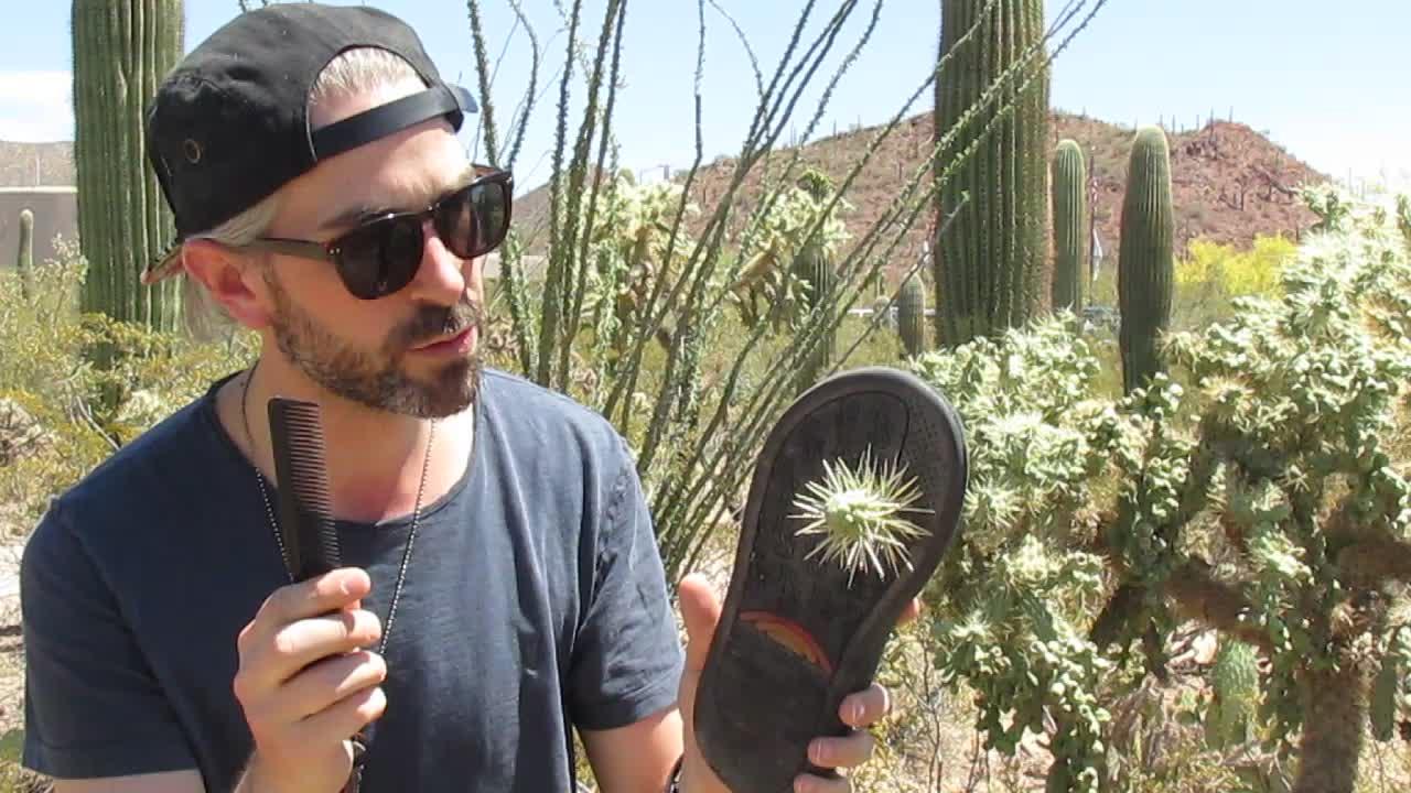 Cactus Lesson
