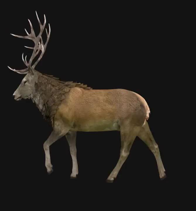 3D Deer 360