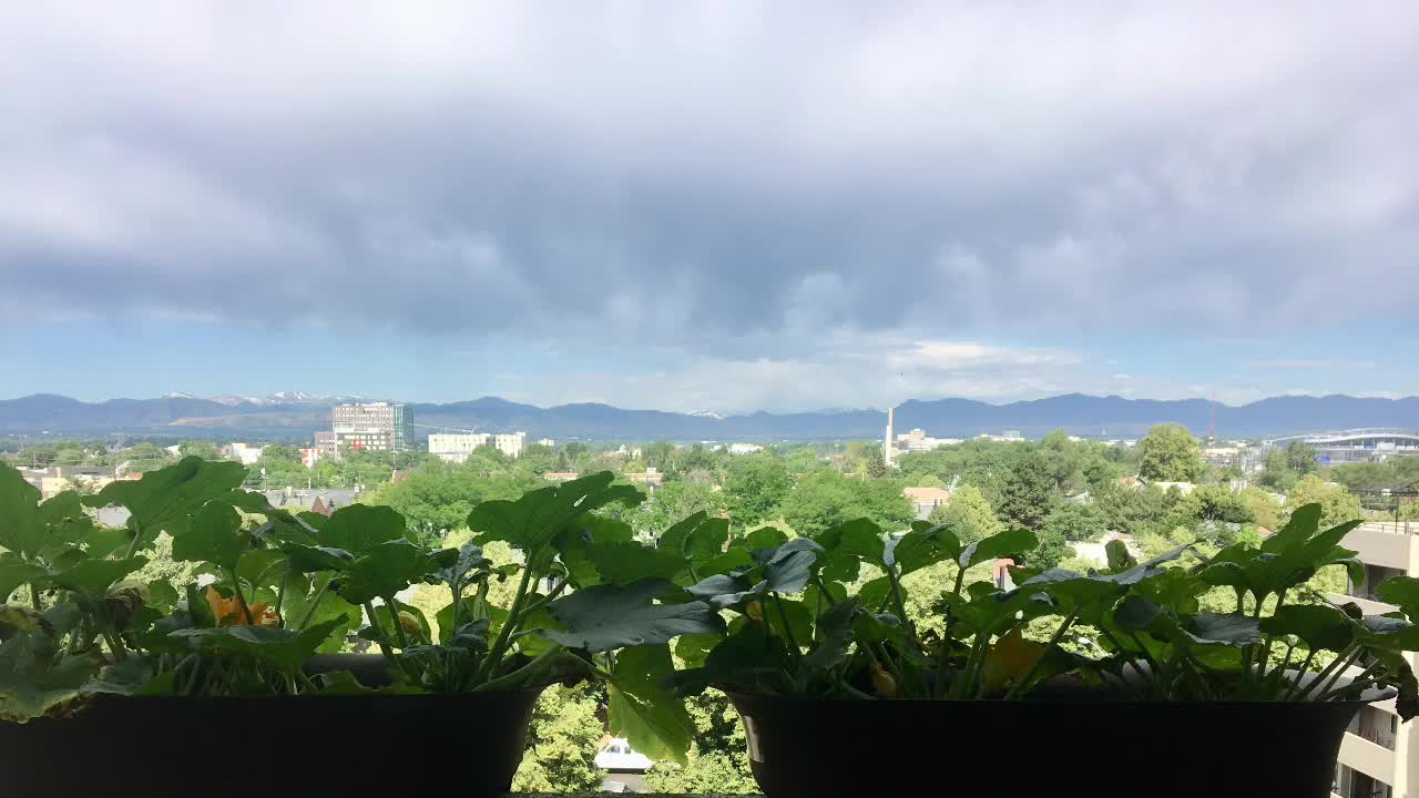 Getting Started with Balcony Gardening