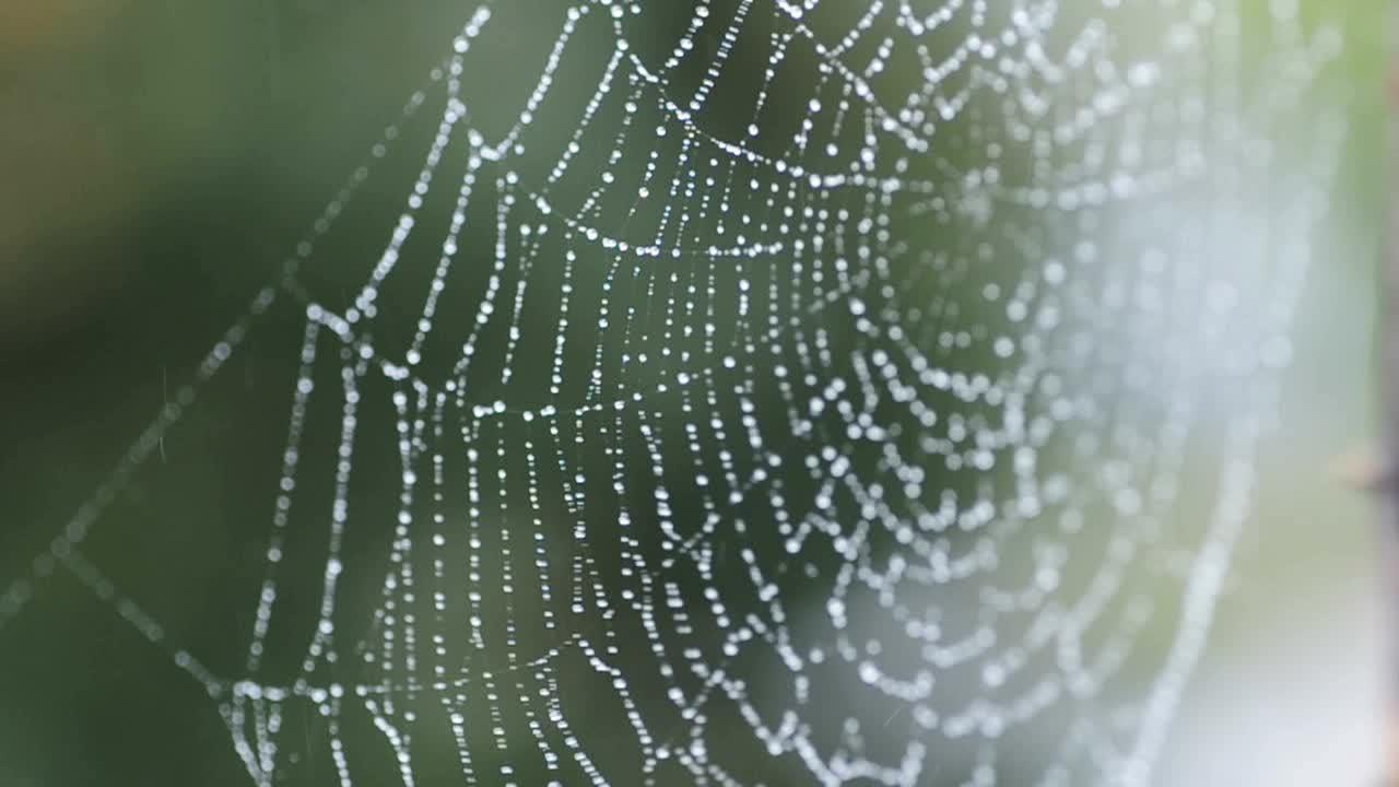 Spider Web Video