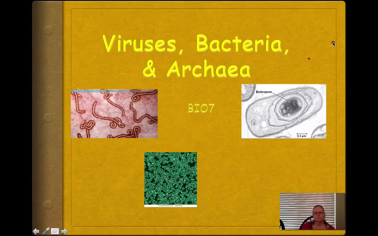 8. BIO7 - Viruses, Bacteria, and Archaea